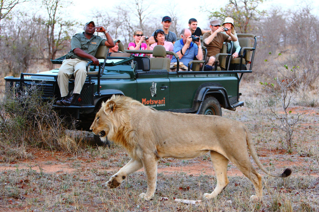 Motswari Private Game Reserve_Game Drives (7)