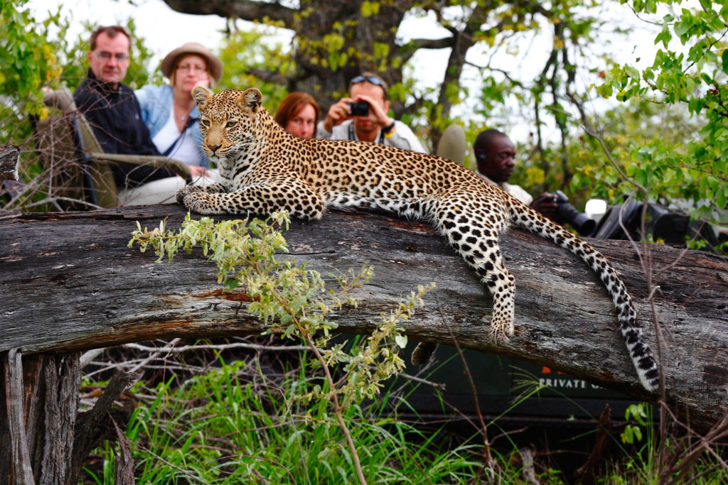 Motswari Private Game Reserve_Leopard (2)
